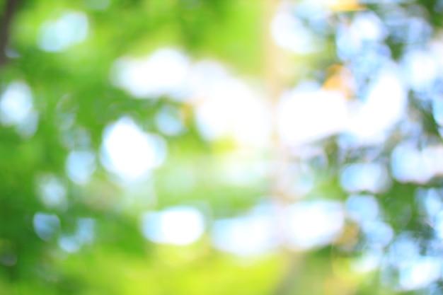 Immagine sfocata di alberi nella foresta mattutina