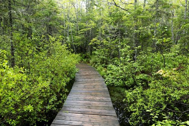 Boardwalk che conduce verso la foresta, new brunswick, canada
