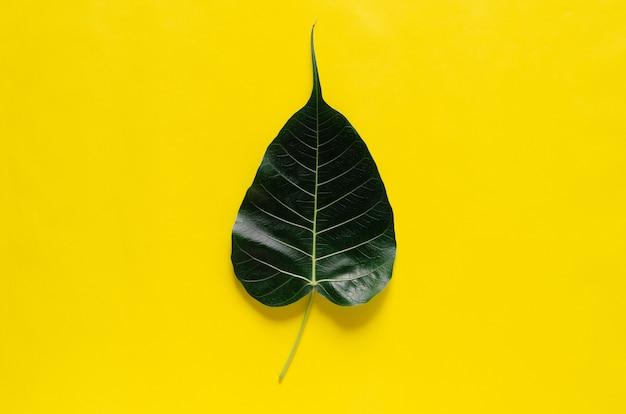 Foglia di bodhi su sfondo giallo