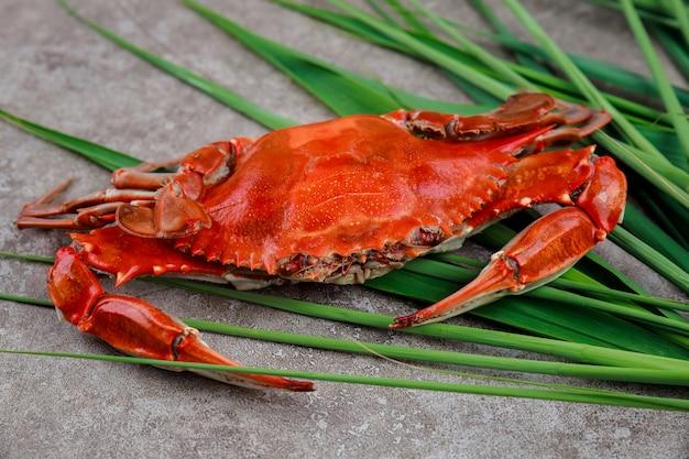 Granchio rosso bollito su sfondo grigio. frutti di mare.