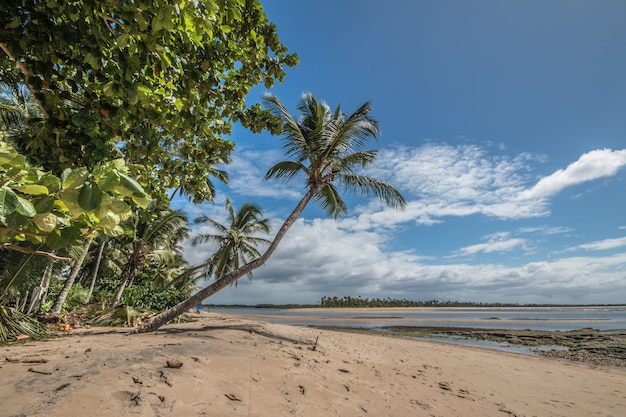 Isola tropicale di boipeba nel nordest del brasile a bahia.