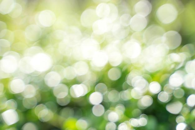 Foglia di bokeh con luce solare, utilizzare per sfondo astratto.