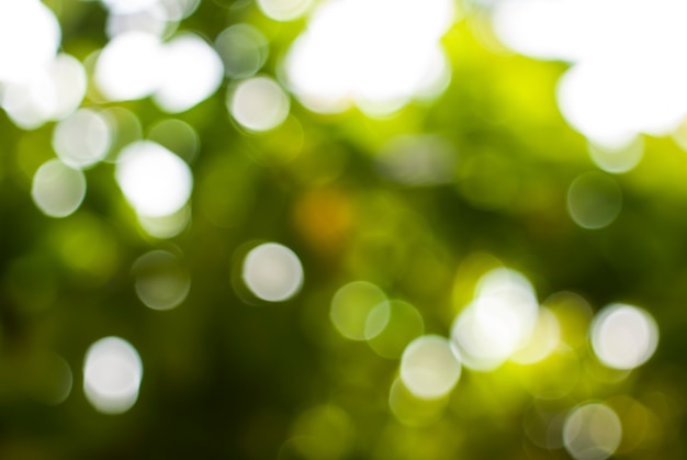 Bokeh verde naturale sfondo sfocato.