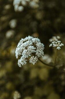 Bokeh di un fiore bianco con uno sfondo verde