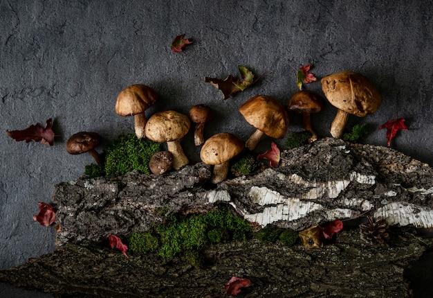 Funghi porcini e muschio. cibo sano e delicato