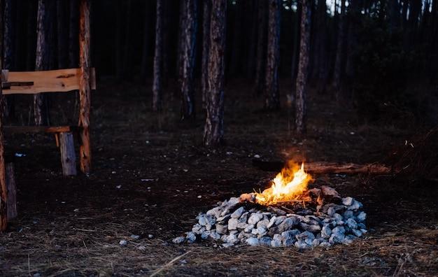 Falò nella serata della natura della foresta