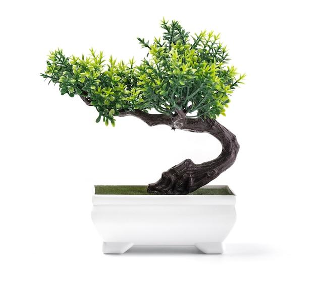 Bonsai di pino contro uno sfondo di muro bianco