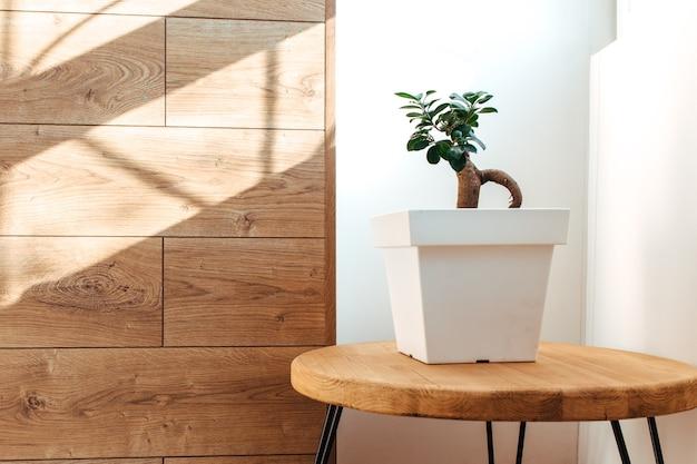 Albero dei bonsai all'interno vicino al design degli interni del concetto di parete in legno