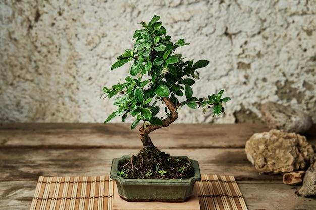 Albero dei bonsai su un tavolo di legno