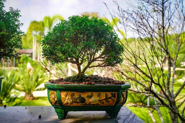 Albero di bonzai sul tavolo di legno in giardino.