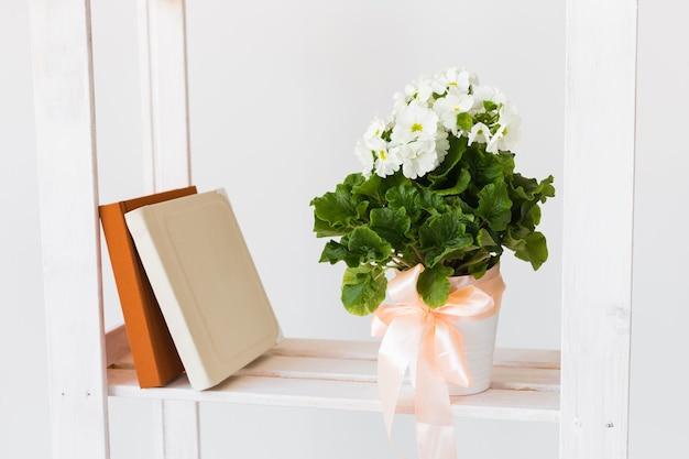Libri e piante d'appartamento su uno scaffale. composizione minima. concetto di interni di primavera.