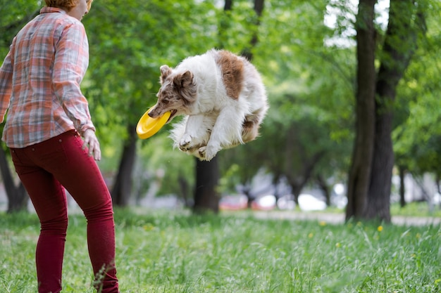 Border collie cane cattura un disco volante