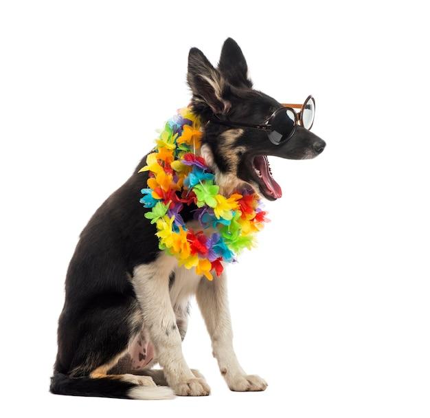 Border collie seduto e indossando occhiali da sole e una lei hawaiana