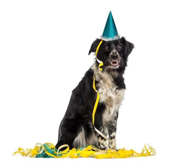 Border collie che indossa un cappello da festa e seduto in serpentine