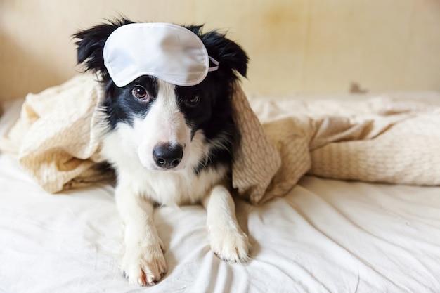 Border collie con maschera per gli occhi giaceva sul cuscino coperta a letto.