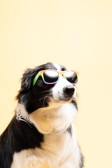 Border collie con occhiali da sole con bandiera arcobaleno su sfondo giallo lgtb copy space