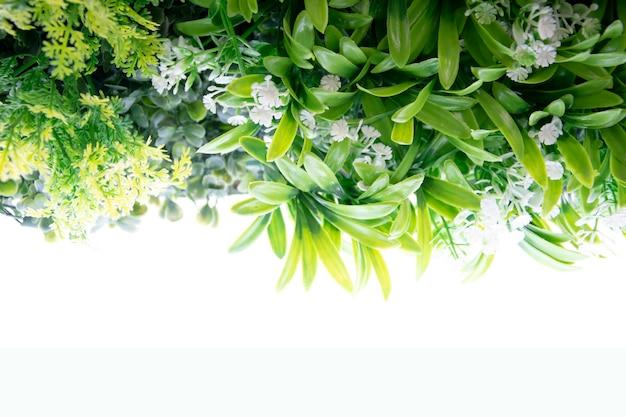 Bordo cornice fatta di foglie verdi e piante su sfondo bianco.