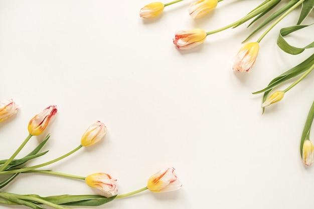 Confine cornice fatta di fiori di tulipano giallo su bianco
