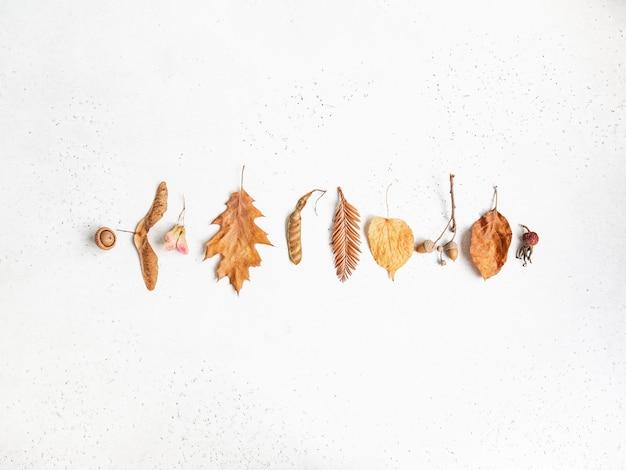 Bordo di vari semi e foglie di alberi selvatici isolati su uno sfondo bianco trama. priorità bassa di botanica caduta minima. vista dall'alto. copia spazio