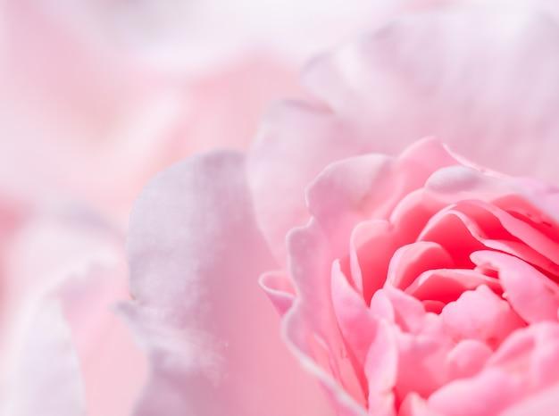 Concetto botanico, carta di invito a nozze - flou, sfondo floreale astratto, fiore di rosa rosa. sfondo di fiori macro per il design del marchio delle vacanze