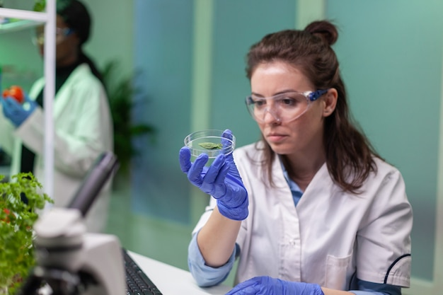 Donna botanica che guarda una capsula di petri con un campione di foglie che controlla il test ogm