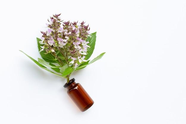 Bottiglia di olio essenziale con foglie di basilico dolce fresco e fiori su bianco