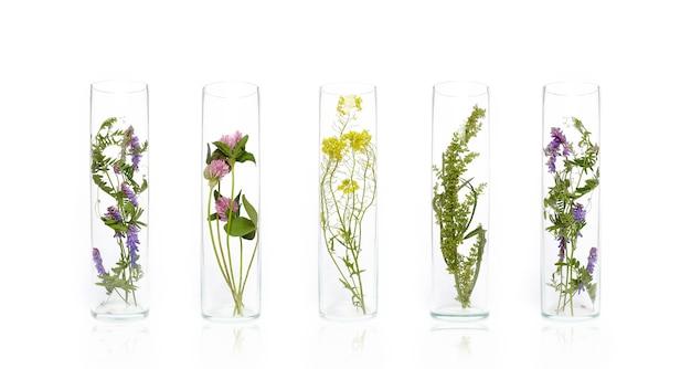 Bottiglia cosmetici naturali prodotto biologico da piante e fiori, cosmetici in tubo a base di erbe per la cura della pelle