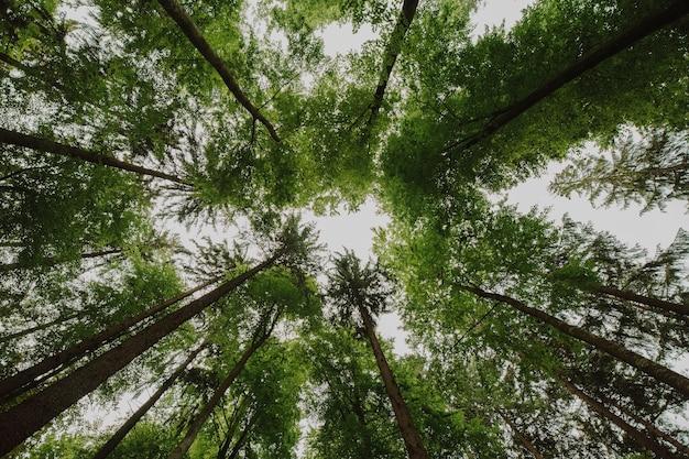 Vista dal basso di un gruppo di alberi Foto Premium