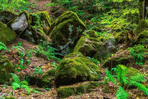 Massi ricoperti di muschio nella foresta