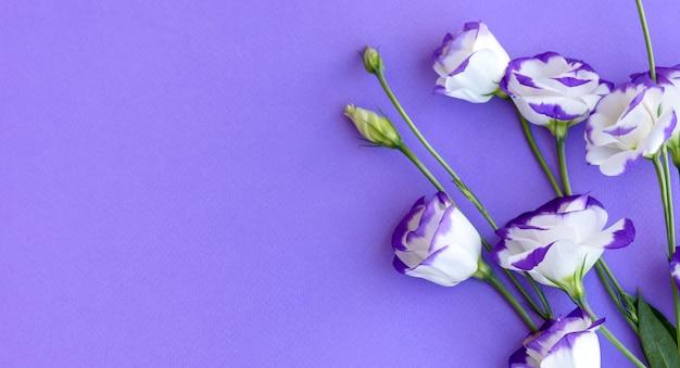 Un bouquet di bellissimi eustoma viola appena tagliati su uno sfondo di una tonnellata