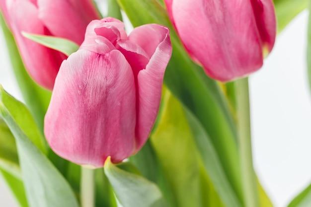 Bouquet di bellissimi tulipani rosa contro uno sfondo sfocato di steli e foglie verdi. delicati fiori primaverili come regalo per le vacanze. messa a fuoco selettiva