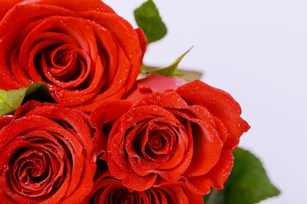 Bouquet di bellissime rose rosse isolato su sfondo bianco. festa della mamma o san valentino.