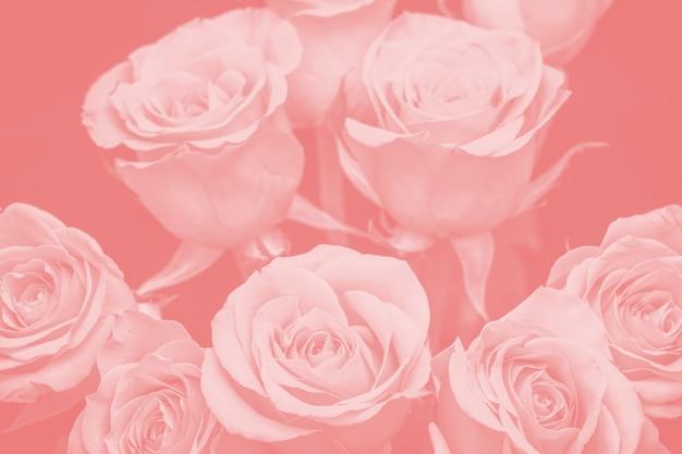 Bouquet di bellissime rose con sfumatura rossa. composizione floreale