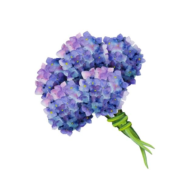 Bouquet di ortensie blu, elemento di fiori dell'acquerello