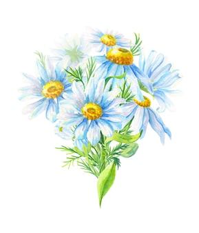 Bouquet di camomilla. fiore astratto per la decorazione. illustrazione floreale dell'acquerello. erba di campo estivo.