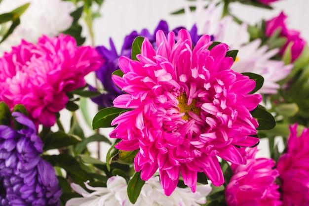 Bouquet di crisantemi su sfondo bianco. natura morta di coloratissimi fiori autunnali. i fiori si chiudono
