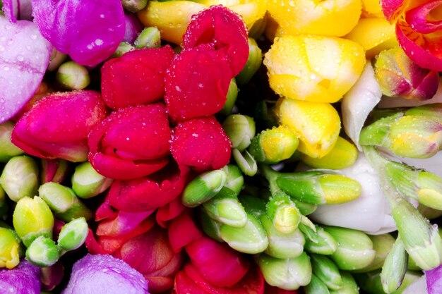 Bouquet di gemme colorate di fresia