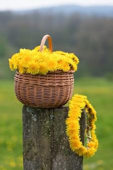 Bouquet di fiori di tarassaco nel cesto di vimini con ghirlanda sulla staccionata in legno.