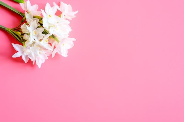 Un mazzo di fiori narcisi di colore bianco in piena fioritura sul rosa