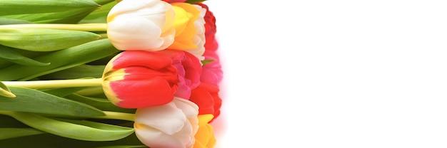 Bouquet di tulipani freschi, luminosi e multicolori su uno spazio bianco, isolato.