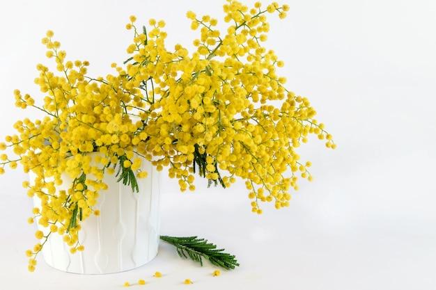 Il mazzo delle mimose gialle fresche sul fondo bianco ha isolato il primo piano