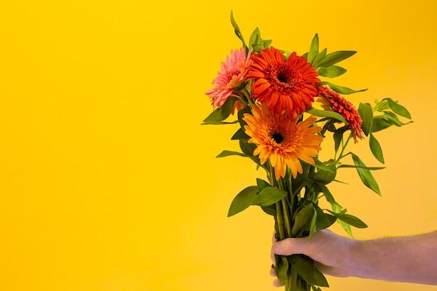 Bouquet di gerbere in una mano d'uomo su sfondo giallo, spazio copia