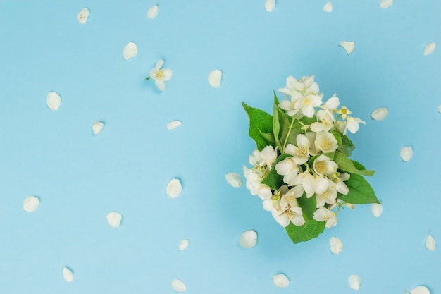 Un bouquet di fiori di gelsomino e petali di gelsomino su sfondo blu. fiori di primavera. disposizione piatta.
