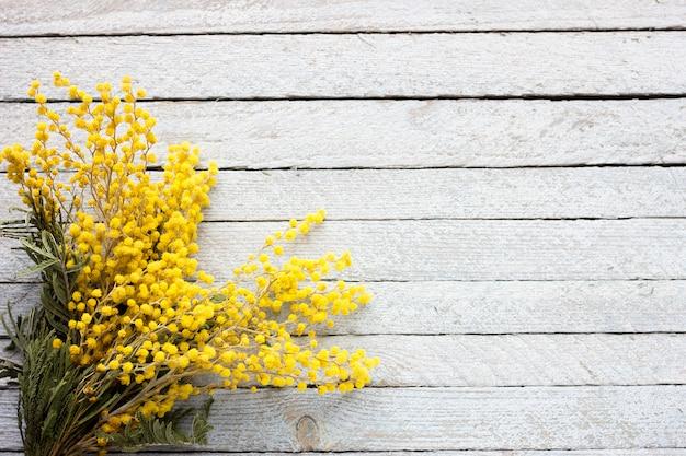 Un mazzo della mimosa su un fondo di legno blu, ramoscelli di fioritura della molla su un vecchio fondo di legno