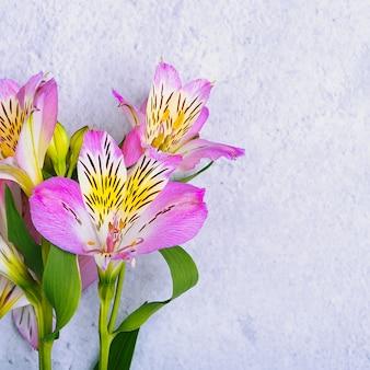 Il bouquet di orchidee è bellissimo, fresco, lilla brillante su fondo chiaro.