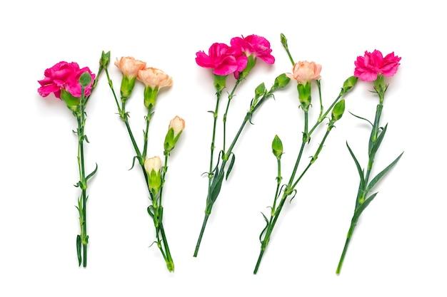 Bouquet di fiori di garofano rosa isolati su sfondo bianco vista dall'alto biglietto di auguri laico piatto 8 marzo