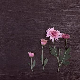 Bouquet di fiori di crisantemo rosa su uno sfondo di legno scuro