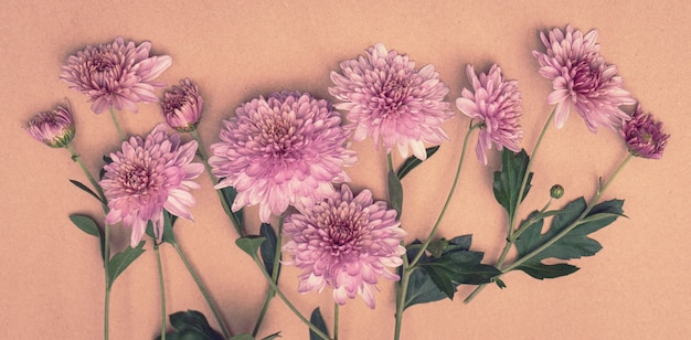 Bouquet di fiori di crisantemo rosa su sfondo pastello