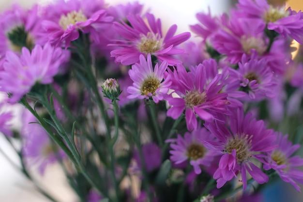 Bouquet di fiori rosa sfondo naturale