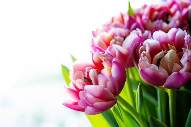 Bouquet di tulipani rosa. festa della mamma, san valentino, concetto di celebrazione di compleanno. biglietto d'auguri. copia spazio per il testo, vista dall'alto